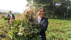 Phát triển nông nghiệp Cao Bằng: Nỗ lực lách qua cửa hẹp