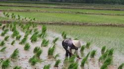 Ninh Bình: Chú trọng nâng cao thu nhập của người dân