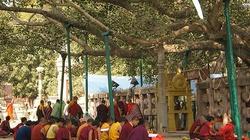 Bồ đề 2.500 tuổi sừng sững trước điện thờ thiêng