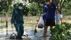 Cưỡng chế tiêu diệt 180.000 con chuột nuôi: Cá, cây cũng chết