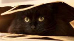 Hành hạ mèo tới chết, 2 bố con bị phạt tù