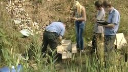 Nga: Bàng hoàng trước 248 bào thai trong rừng