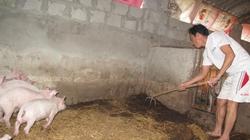 Hỗ trợ chăn nuôi lợn: Không họp dân để bình xét là sai