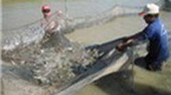 Ban hành danh mục bệnh thủy sản phải công bố dịch