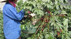 Hội nông dân Sơn La: Cùng nhà nông đua tài