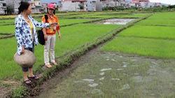 Cấp bù thóc giống cho nông dân ở Bắc Giang