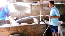 Giã từ bục giảng về quê nuôi lợn