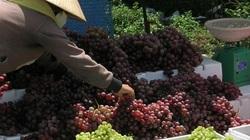 Siết chặt nhập khẩu  nông sản Trung Quốc