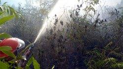 Khánh Hòa: 6 vụ cháy rừng thiêu rụi hơn 46ha