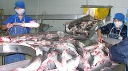 Xây dựng cơ chế thu mua tạm trữ cá tra