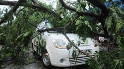Hà Nội: Bão lớn đổ bộ, cây xanh bật gốc, đè bẹp ô tô