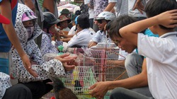 Cơn sốt săn chim cảnh: Lợi nhuận bất thường
