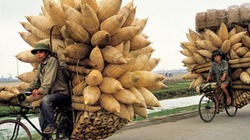 Xe đạp Việt ngày nay qua góc nhìn của báo Anh