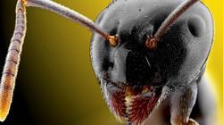 Cận cảnh côn trùng gớm ghiếc như… ác quỷ