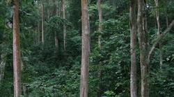 """Xuyên rừng quốc gia Pù Mát: Kỳ bí """"địa đàng xanh"""""""