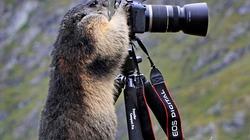 Ảnh đẹp động vật: Sóc tập làm nhiếp ảnh gia