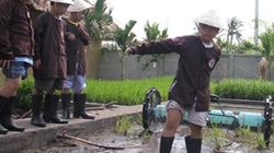 Trẻ thị thành học trồng lúa nước