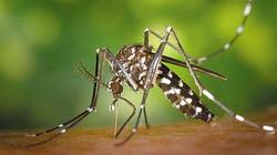 Đà Nẵng: Xuất hiện muỗi hổ châu Á