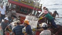 Tàu cá bị bão nhấn chìm, 17 ngư dân trôi dạt trên biển