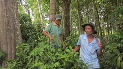 Nông dân chung sức giữ rừng