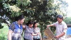 An dân nông thôn