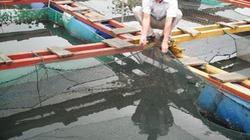 Làng chài hồi sinh nhờ nuôi cá lồng bè
