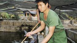 Chống nhập lậu cá tầm từ Trung Quốc: Không thể chậm trễ hơn