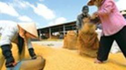 Giá gạo Việt Nam rẻ nhất thế giới