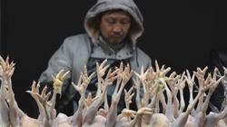 Chân gà quá hạn gần nửa thế kỷ được nhập lậu từ... Việt Nam (?)