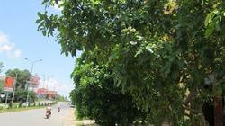 Quảng Trị: Trồng gần 1.000 cây lộc vừng ở TP.Đông Hà
