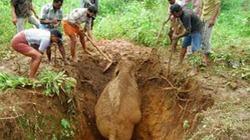 Cuộc giải cứu voi kỳ lạ ở Ấn Độ