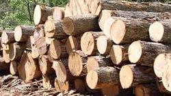 Chủ tịch MTTQ xã  vận chuyển gỗ trái phép
