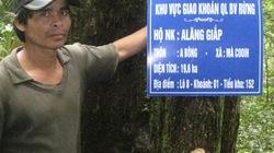 Rừng Quảng Nam đang được quản lý, bảo vệ tốt hơn