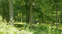 Đề nghị các tỉnh sớm lập Quỹ Bảo vệ và Phát triển rừng