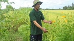 """""""Công nghệ sinh thái"""" trên cây lúa mang hiệu quả lớn"""