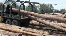 Siết chặt khai thác  rừng tự nhiên