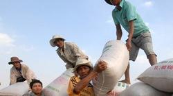 Người trồng lúa vẫn nhiều lo âu