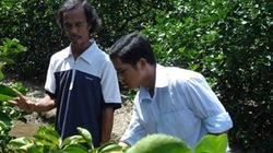 Thu tiền tỷ nhờ... kiên trì trồng chanh