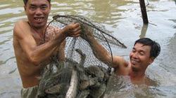 Cách quản lý chăm sóc cá lóc