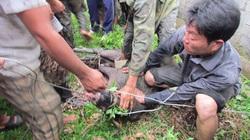 Cận cảnh phóng viên bị lợn rừng tấn công ở Nghệ An