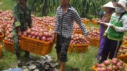 Động lực để cải cách nền nông nghiệp
