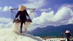 Sản lượng muối tăng hơn 40%