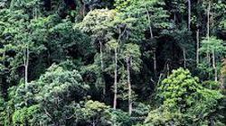 Bảo vệ hiệu quả 0,57 triệu ha rừng nguyên sinh