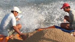Người nuôi cá tra ở ĐBSCL: Liên kết doanh nghiệp để sống cầm cự