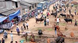 Đi chợ bò mà lo được vợ