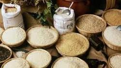 FAO dự báo: Giá lương thực toàn cầu sẽ tiếp tục giảm