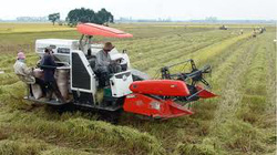 Cần Thơ: Vận động nông dân làm 18.000ha cánh đồng mẫu lớn