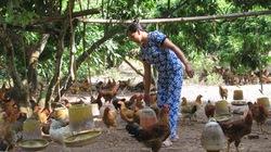 Gà đồi Yên Thế là sản phẩm tốt nhất Đông Nam Á