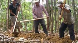 Phú Yên: Trục xuất 213 người tìm trầm bì
