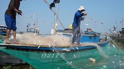 Lập thêm 2 nghiệp đoàn nghề cá ở Quảng Nam